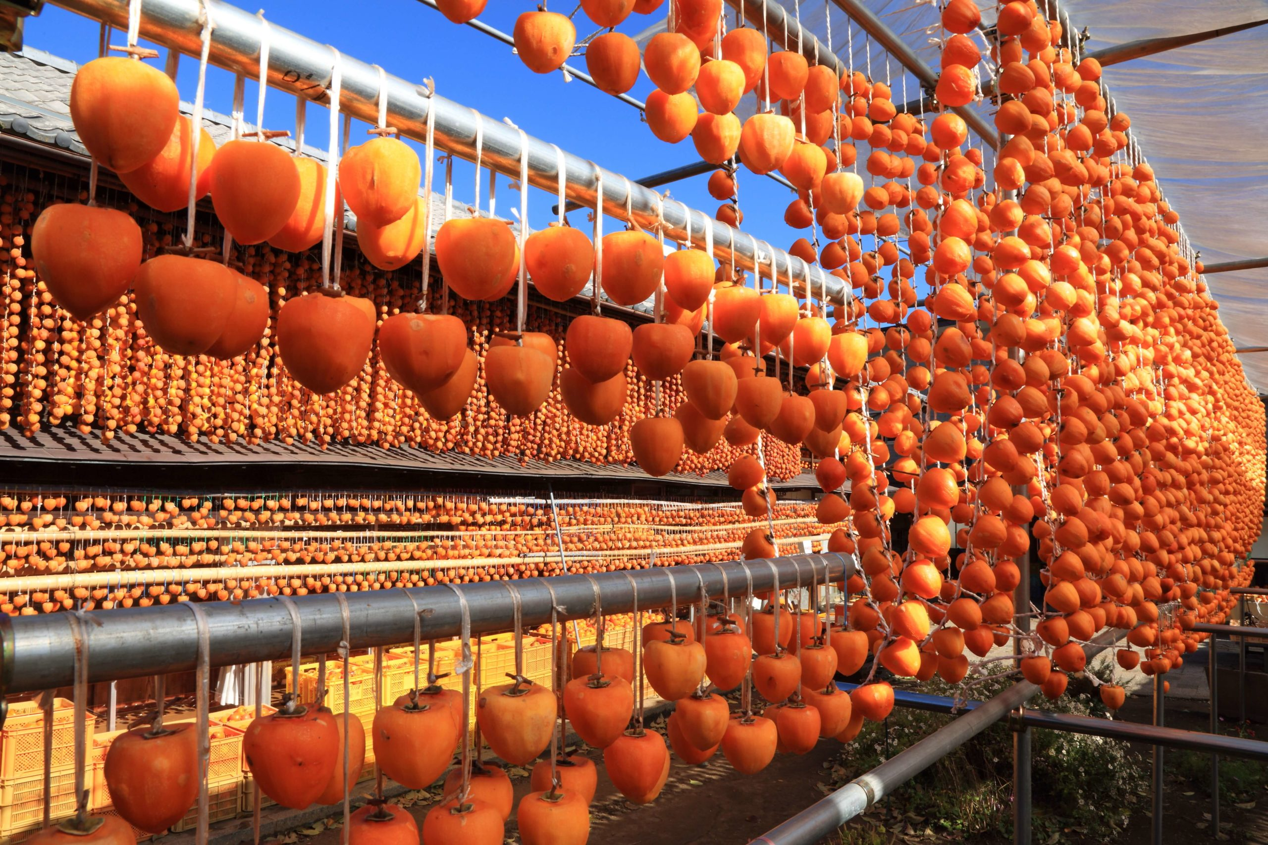All About Kaki -- the Must Try Autumn Flavor of Japan