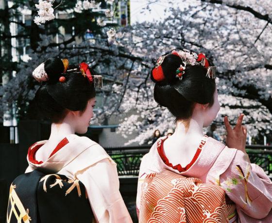 Geisha blossoms kyoto