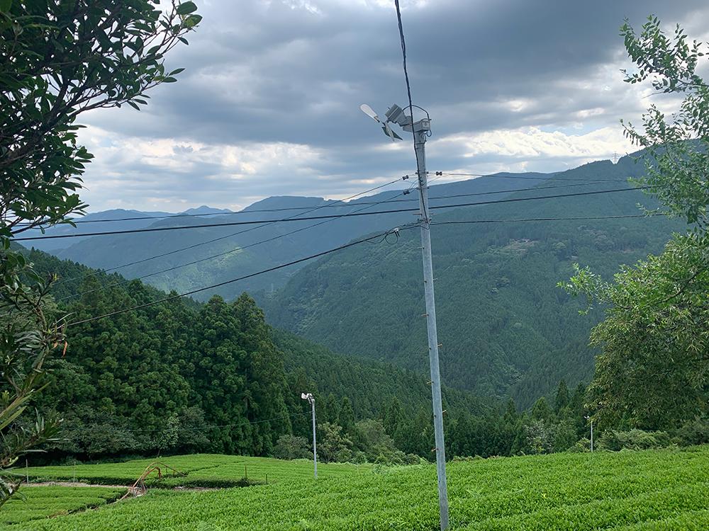 Tea farm Kawane