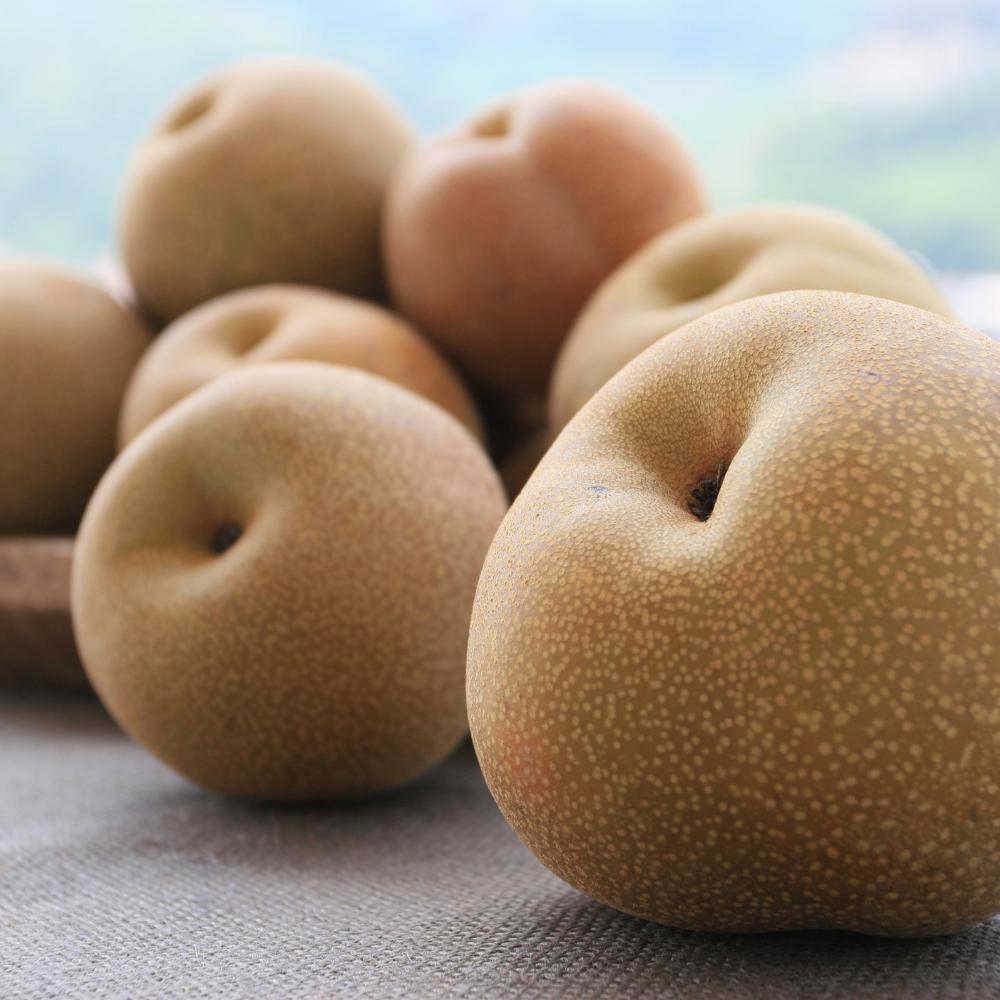 Nashi (Asian pears)